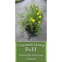 Лапчатка кустарниковая Кобольд (Potentilla fruticosa Kobold)