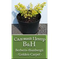 Барбарис тунберга (Berberis thunbergii Golden Carpet)