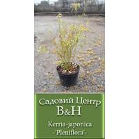 Керрія японська (Kerria japonica Pleniflora)