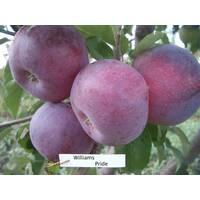 Саженцы яблони Вильямс Прайс