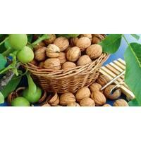 Саджанці волоського горіха і фундука
