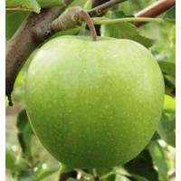 Саженцы яблони Гренни Смит