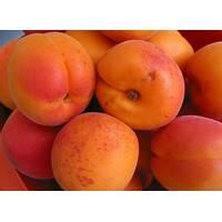 Саженцы абрикоса НЖА19