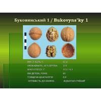 Буковинский1 (ПРИЩЕПЛЕНИЙ) однорічний