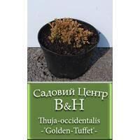 Туя західна Голден Таффет (Thuja occidentalis Golden Tuffet)