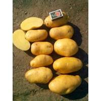 Картофель Гранада  за 8 кг (ІКР-130-П8)