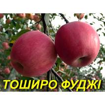 """Саженцы яблони """"Тоширо Фуджи"""""""