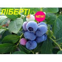 "Голубика (черника) ""Либерти"" (ЗКС) 3 г."