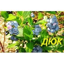 "Голубика (черника) ""Дюк"" (ЗКС)"