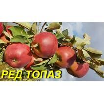 "Саженцы яблони ""Ред Топаз"""