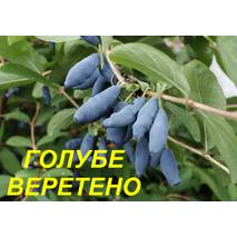 """Саженцы жимолости """"Голубое веретено"""" (ЗКС) 3 г."""