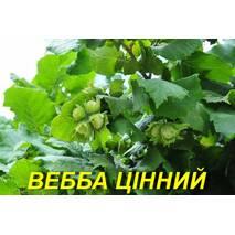 "Фундук ""Вебба Ценный"" 2г."