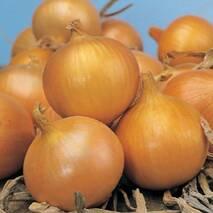 Лук севок Сеншуй за 0,5 кг (ЕЦБ-15В)