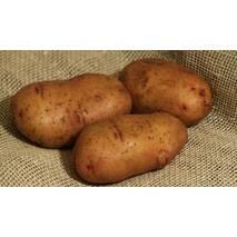 Насіннєва картопля Тирас за 2 кг (ІКР-67-П2)