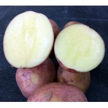 Картопля сорт Злагода (за 4 кг)
