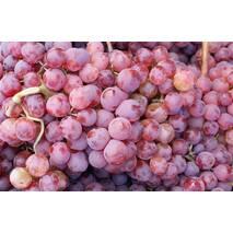 """Саджанці винограду """"Червоне полум'я"""""""