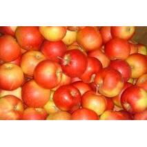 Яблука Айдаред на експорт