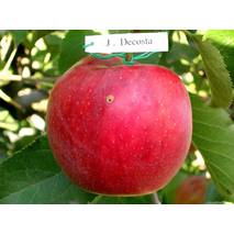 Яблука Джонаголд Декоста