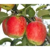 Яблука Дельбарестиваль