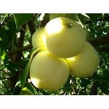Яблука Папіровка