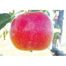 Яблука Топаз на експорт