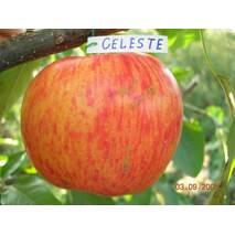Яблука Целесте