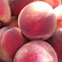 Саджанці персика - Щедрий