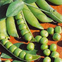 Горох овощной Альфа (ЕГХ-1В) за 20 г