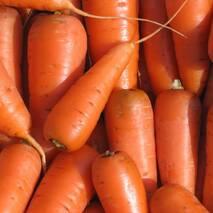 Морковь Аленка за 2 г (ЕМР-2)