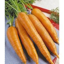 Морковь Королева Осени за 20 г (ЕМР8В)