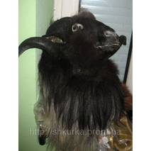 Опудало голови гірського барана