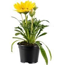 Пластикові горщики для квітів