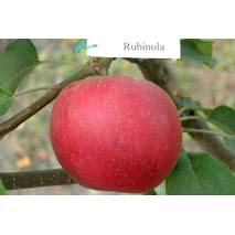 Яблоня Рубинола (Rubinola)