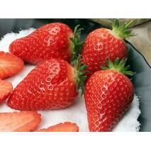 Саджанці полуниці «Альба» (фріго)