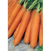 Морковь Перфекция за 2 г