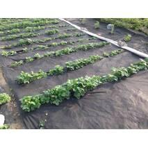 Агроволокно чорне 50% 3.2 метра