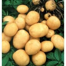Картопля Гранада, упаковка 3 кг