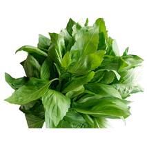 Зелень для ресторанов (рукола, мята, базилик, розмарин)
