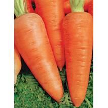 Морковь Царица полей за 2 г (ЕМР-31)