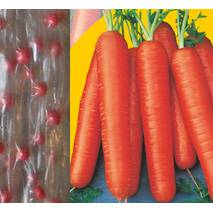Дражоване насіння на стрічці Морква Маріон F1