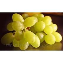 Виноградные косточки раф