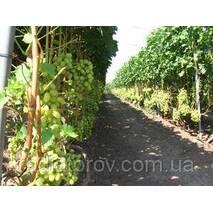 Опоры и шпалеры для вьющихся растений Polyarm