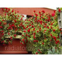 Опоры для плетистых роз и кустовых растений Polyarm