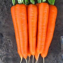 Морковь Лагуна F1  за 10 г (ЕМР-17В)