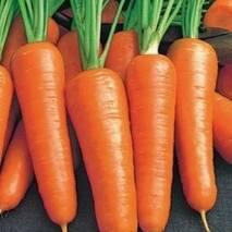 Морковь Шансон супер  за 20 г