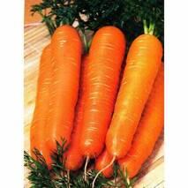 Морковь Красный гигант за 2 г (ЕМР-3)