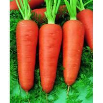 Морковь Долянка за 2 г (ЕМР-13)