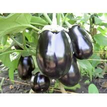 Баклажан Черный красавец за 0,5 г (ЕБЛ-1)