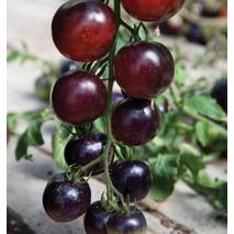 Томат Роза цвета индиго (ЕТМ-381) за 0,1 г