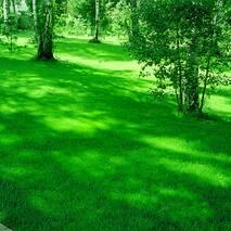 Газонна трава Універсальна за 50 г (ЕГТ-4)